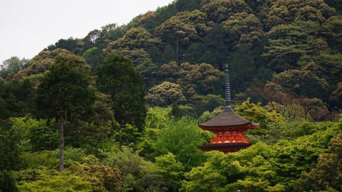 花背トレイルラン~ぶらり京都